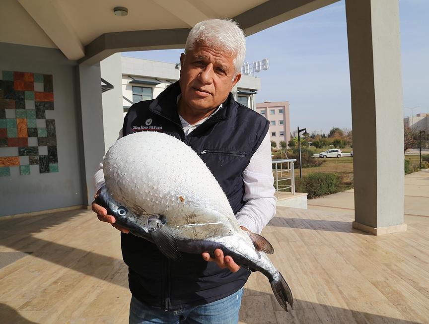 Antalya'da balon balığı yakalandı galerisi resim 1