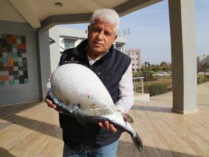Antalya'da balon balığı yakalandı