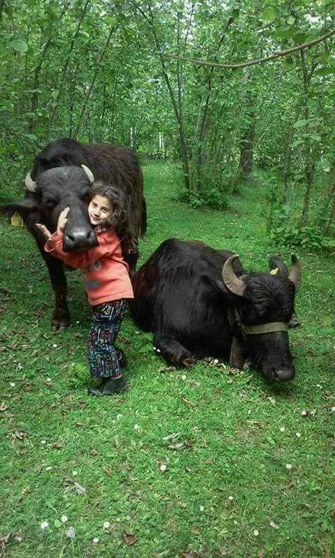 Köylerimizden birbirinden güzel hayvan resimleri galerisi resim 7