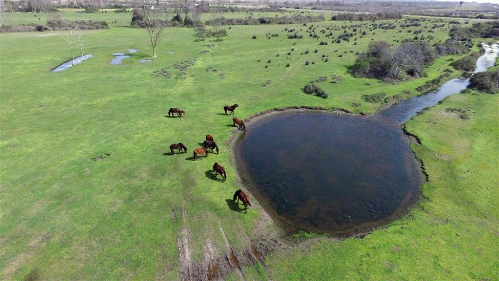 Kızılırmak Deltası'nda bahar hareketliliği galerisi resim 1