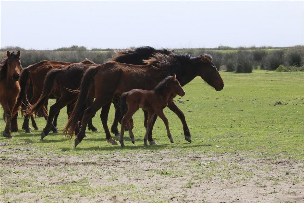 Kızılırmak Deltası'nda bahar hareketliliği galerisi resim 7