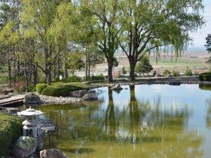 İlkbahar Japon Bahçesi'ne güzellik kattı