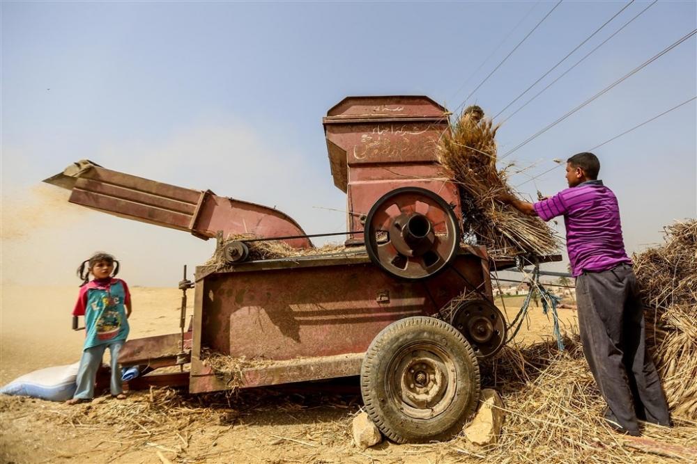 Mısır'da buğday hasadı galerisi resim 17
