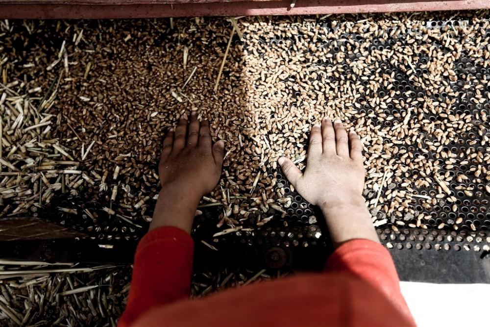 Mısır'da buğday hasadı galerisi resim 21