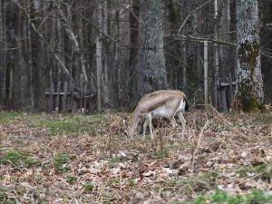 Longoz ormanlarında 'ilkbahar güzelliği'