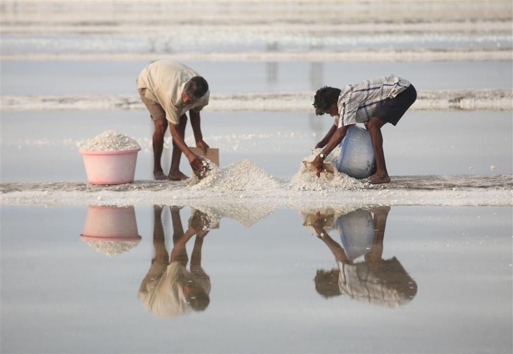 Bombay'da tuz hasadı galerisi resim 1