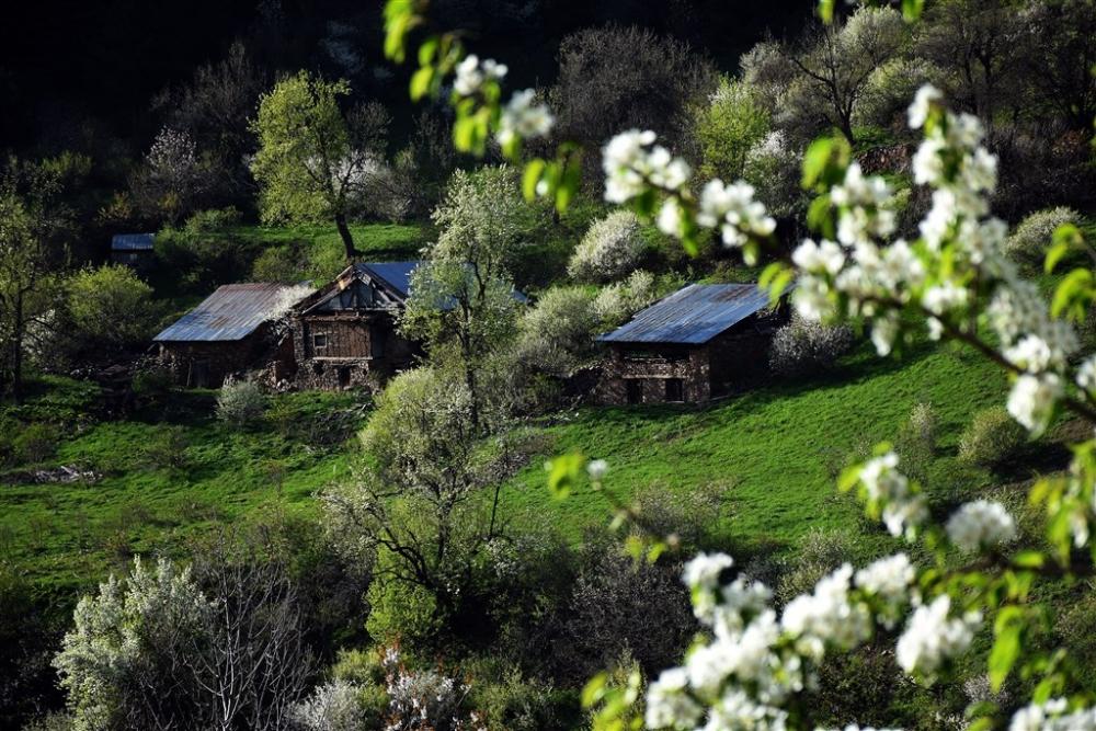 Doğu Karadeniz'de ilkbahar bir başka güzel galerisi resim 1