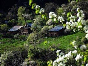 Doğu Karadeniz'de ilkbahar bir başka güzel