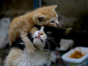 Sokağa terk edilen kediye annelik yapıyor
