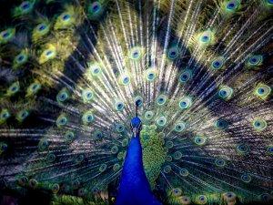 Renkli kanatlar desenleriyle büyülüyor