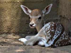 "Gaziantep Hayvanat Bahçesi'nde ""yavru"" sevinci"