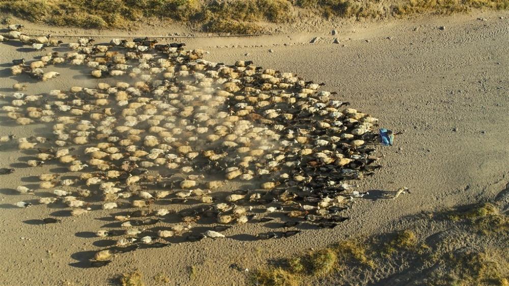 Koyunların Nemrut Dağı'na tozlu yolculuğu galerisi resim 1