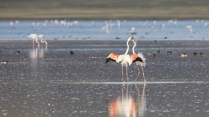 Van Gölü havzasında kuşların görsel şöleni galerisi resim 1