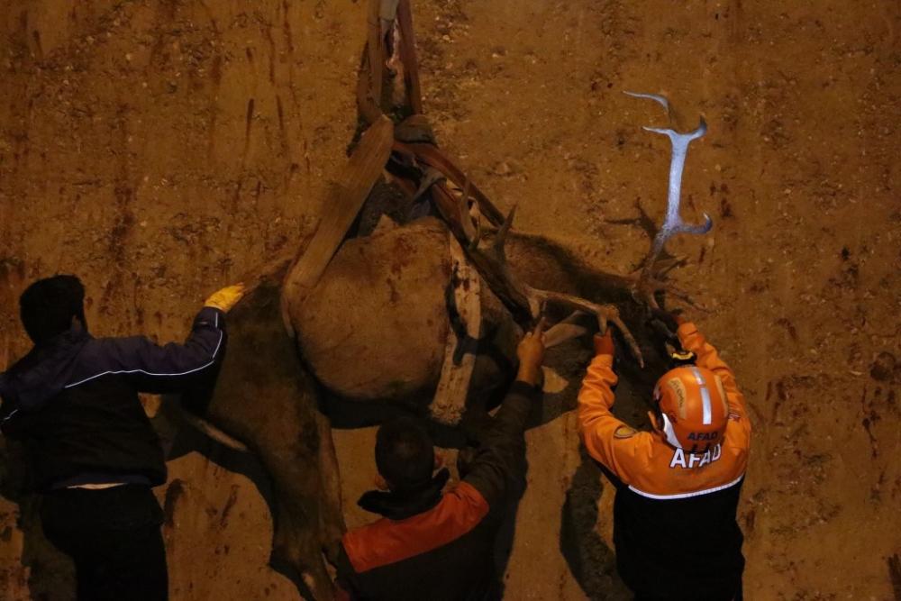 Bolu'da geyik kurtarma operasyonu galerisi resim 1