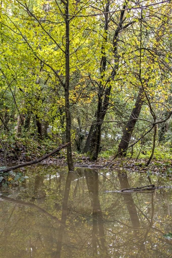 Belgrad Ormanı'nın eşsiz sonhabar manzarası galerisi resim 1