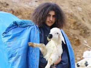 Mandıra filozofu çoban