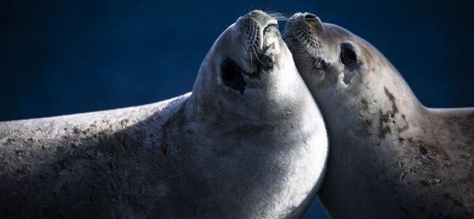 Bilim ve barış kıtası: Antarktika