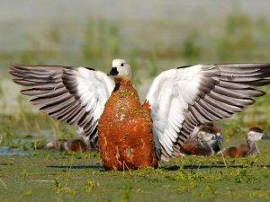 Foto Safari Nallıhan'da
