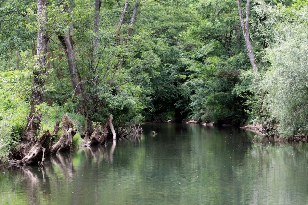İğneada Longoz Ormanları'nda görsel şölen galerisi resim 10