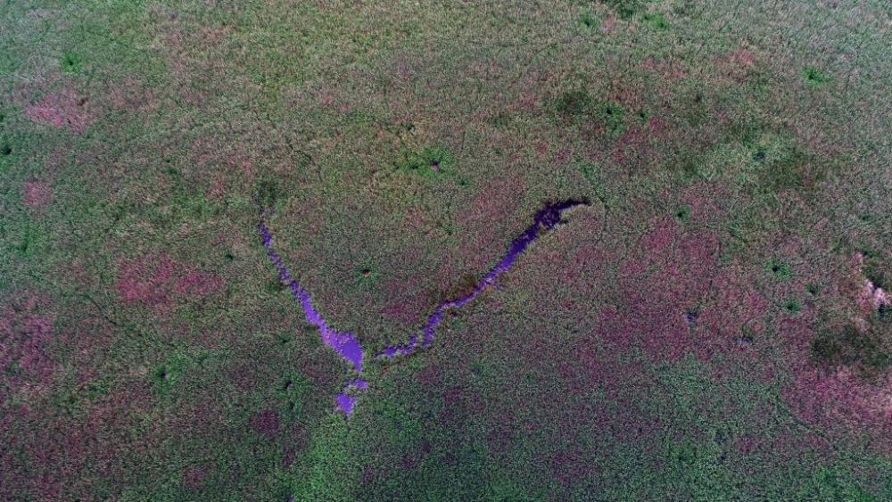 İğneada Longoz Ormanları'nda görsel şölen galerisi resim 21