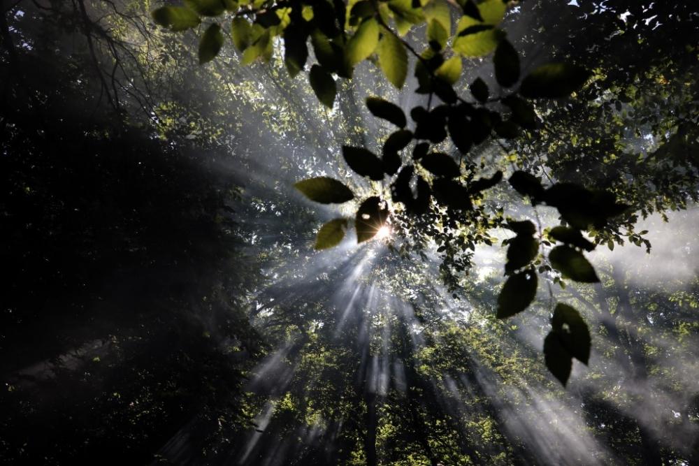İğneada Longoz Ormanları'nda görsel şölen galerisi resim 4