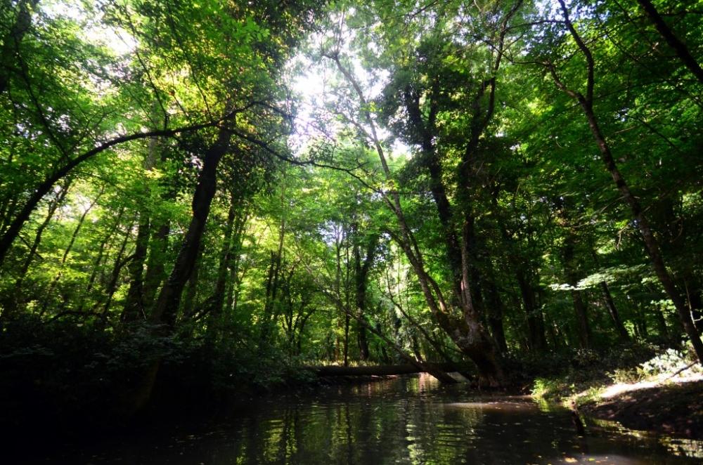 İğneada Longoz Ormanları'nda görsel şölen galerisi resim 8