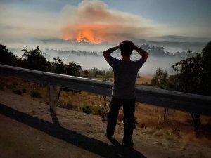 Ankara Nallıhan'da orman yangını