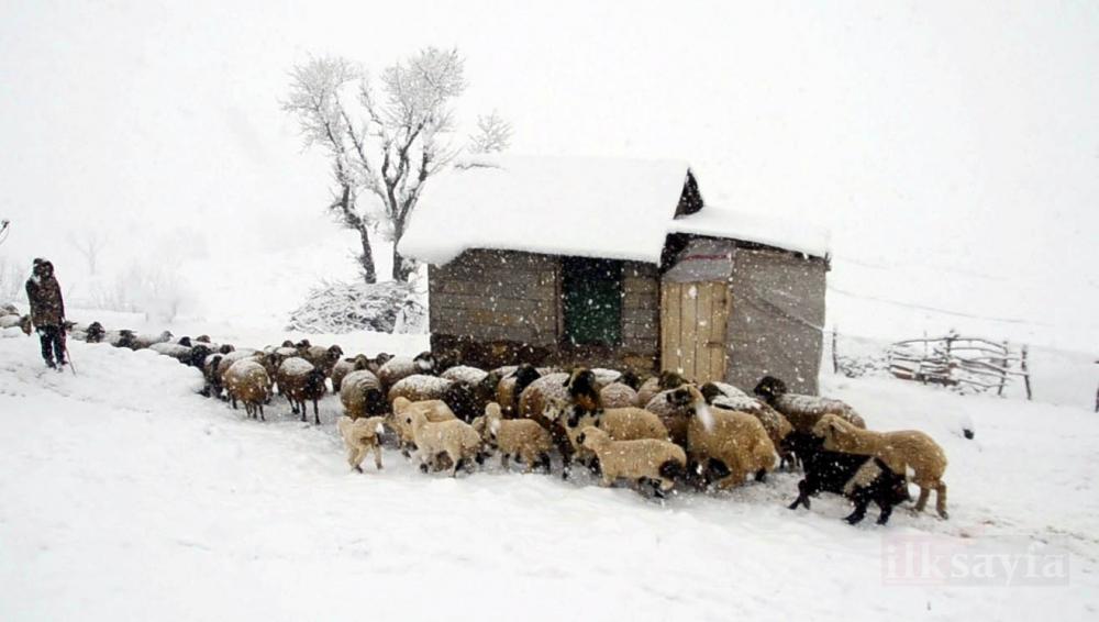 Kuzu ve annelerin kar altındaki buluşmaları yürek ısıttı galerisi resim 1