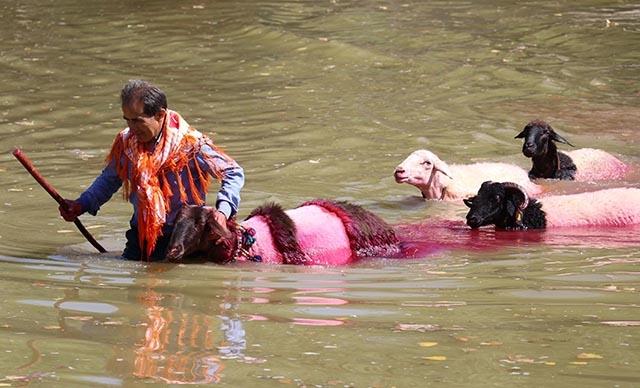 8 asırlık gelenek: Koyunlarını nehirden geçirdiler galerisi resim 1