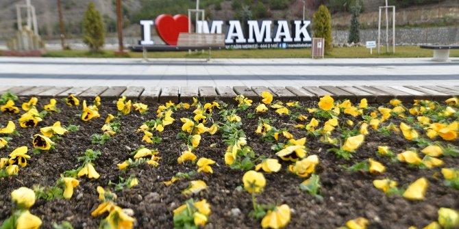 Mamak'ta kışın da çiçeklendirme çalışmaları devam ediyor