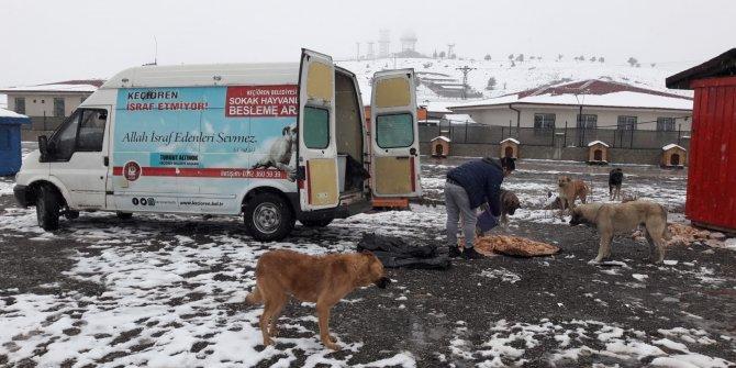 Keçiören'de sokak hayvanlarına yiyecek dağıtıldı