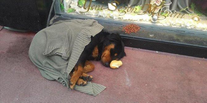 Kaldırımda yatan köpeği soğuktan korumak için üzerine hırka örttüler