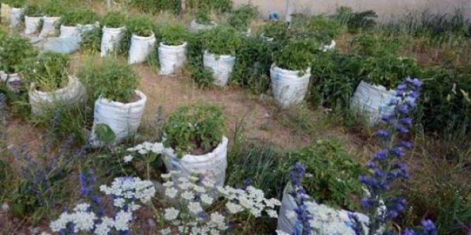 Çuvalda patates yetiştirmenin püf noktaları neler?