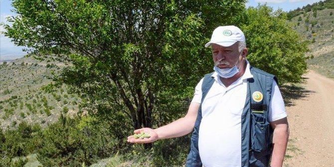 Dağlardaki gelir getirici meyvelerin toplanması için muhtarlarla iş birliği