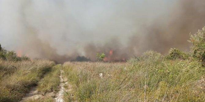 Kızılırmak Deltası Kuş Cenneti'nde sazlık yangını