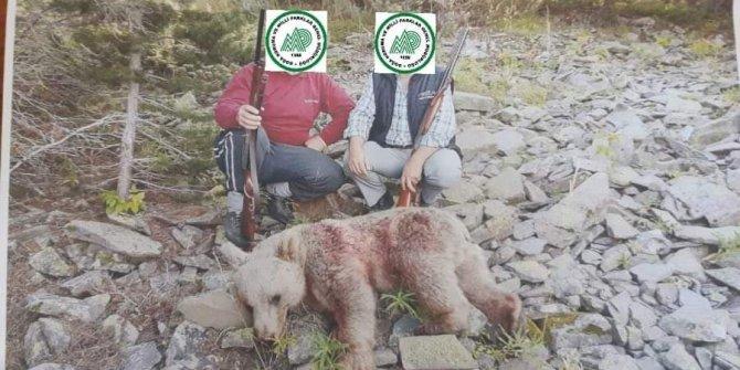 Boz ayı avlayanlar cezadan kaçamadı