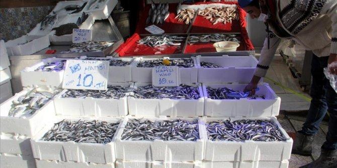Sinop açıklarındaki hamsi bolluğu balıkçıların yüzünü güldürüyor