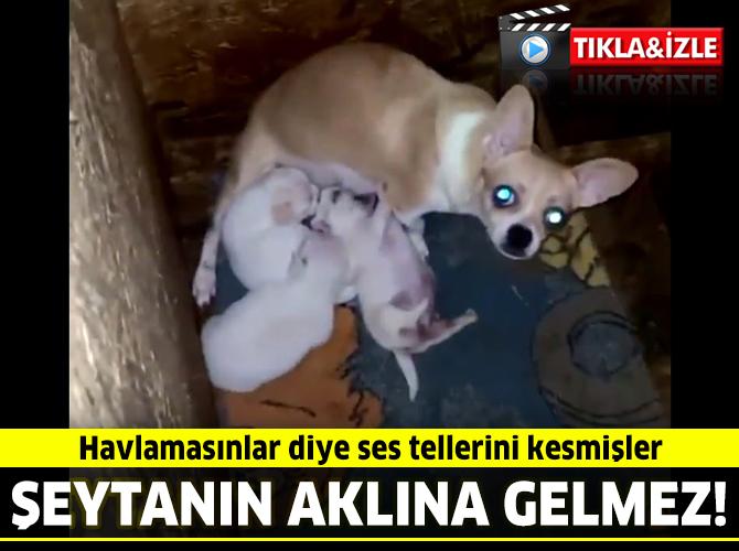 Ankara'da bir bodrum katına yapılan baskında büyük vahşet!