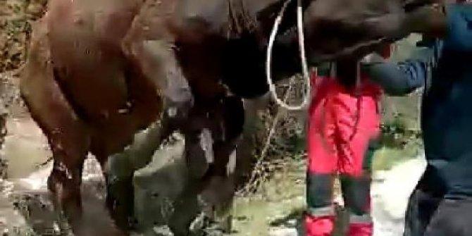 Kuyuya düşen ineği, itfaiye kurtardı