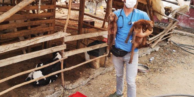 Veterinerler yangından etkilenen hayvanların yaralarını sarıyor