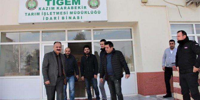 Kazım Karabekir Tigem'den satılık cins sığır