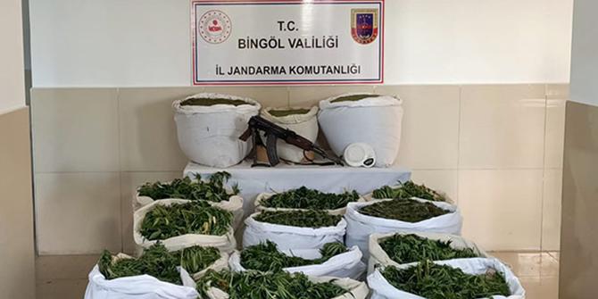Bingöl'de 112 bin 400 kök skunk bitkisi ele geçirildi