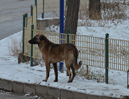 Mamak'ta köpek dehşeti