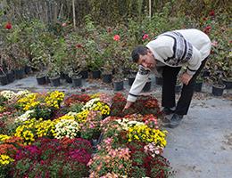 Çiçekçiliğe Soğuk Hava Etkisi
