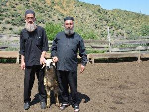 Sürülere çoban mültecilerden