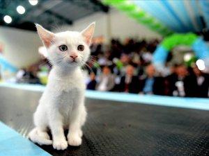 Pursaklar Kedi Festivali sona erdi