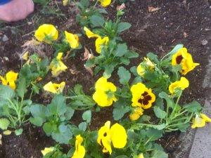 Ekilen çiçeklerle Altındağ daha yeşil