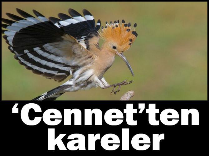 """""""Nallıhan Kuş Cenneti 5. Foto Safari Yarışması"""" Sonuçlandı"""