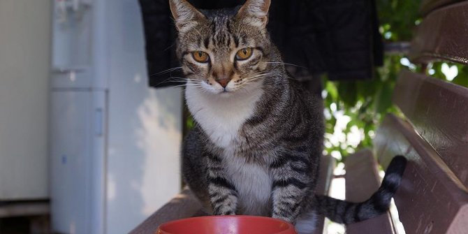 Kedi Hürrem tedavi edildiği taksi durağının maskotu oldu