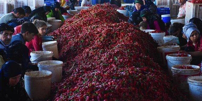 Mevsimlik işçilerin 'acı' hayatı